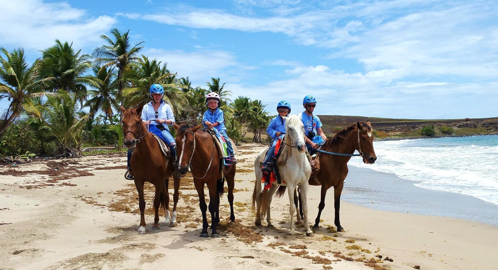 Horseback Ride And Swim With Your Horse In Beautiful Saint Lucia
