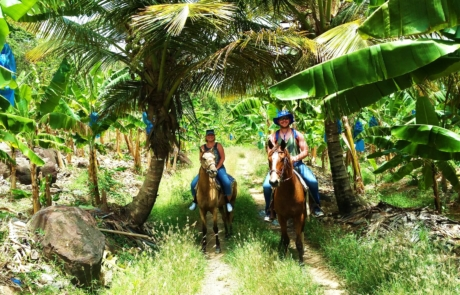 Horse Ride Through Banana Estate In Saint Lucia