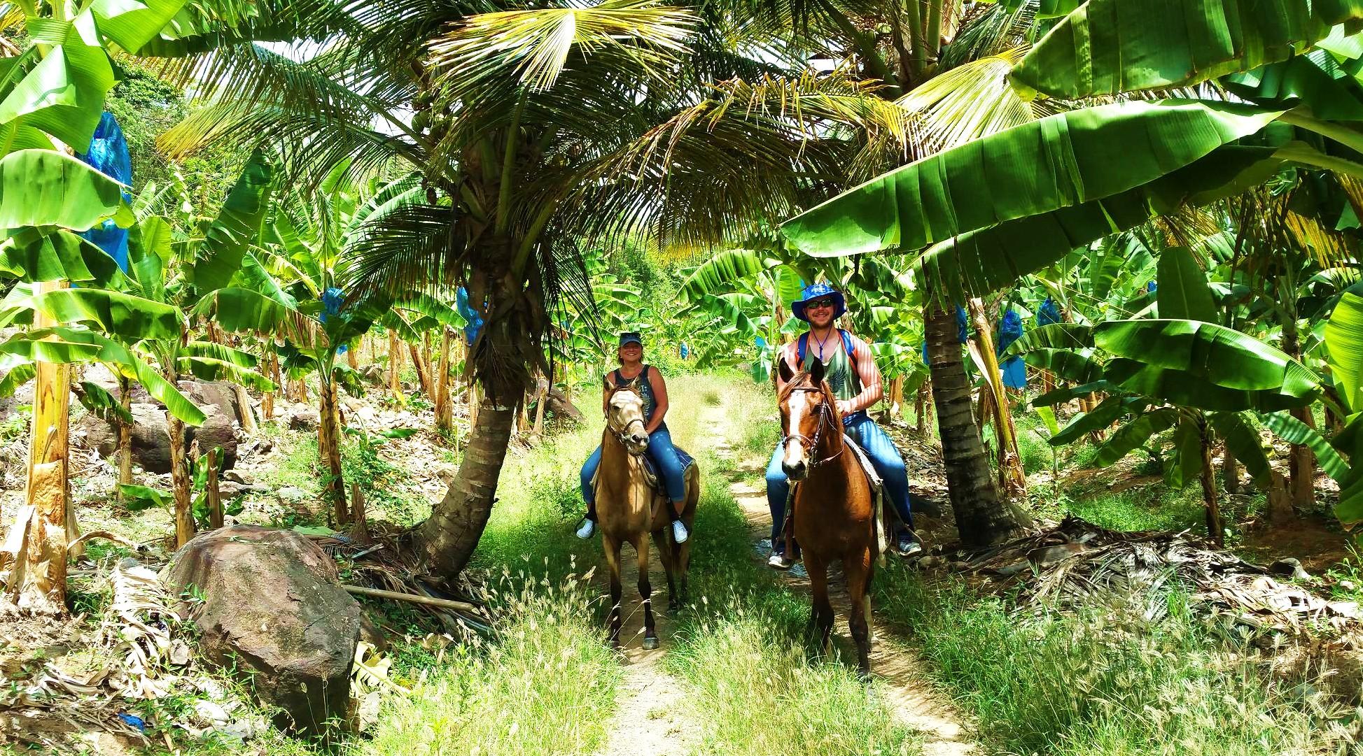Horse Ride Through Banana Estate In Saint Lucia
