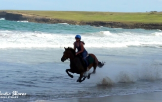 Galloping Horse On Beach In St. Lucia