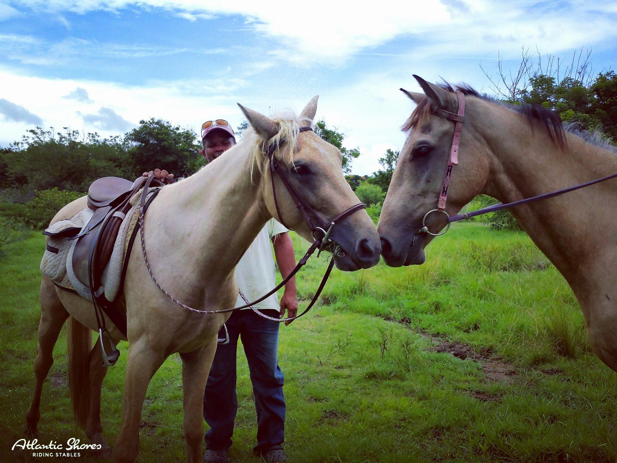 Horses In St.Lucia