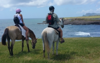 Beautiful Ocean Views On Horses