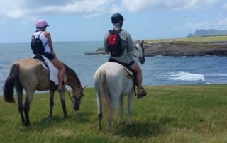 Beautiful Ocean Views On Horses