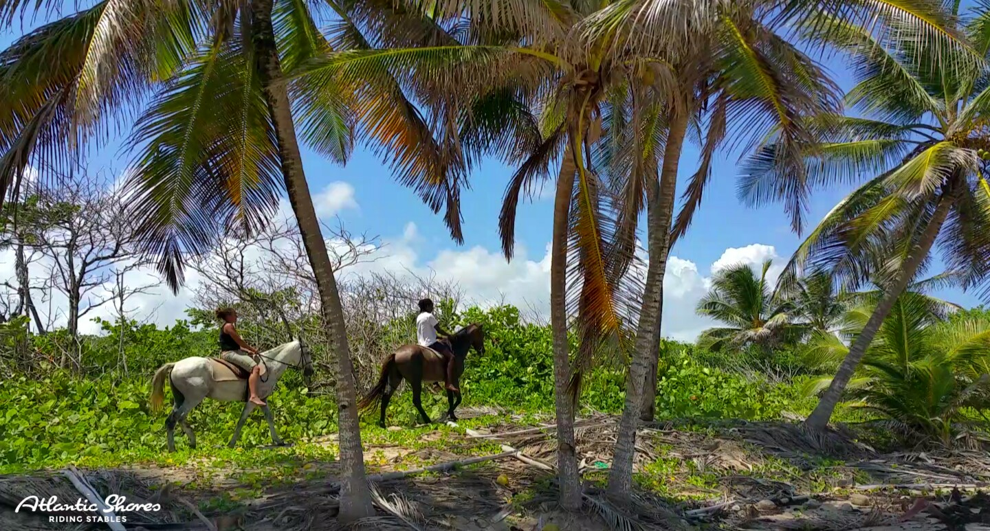 Riding Horses Under Coconut Trees In St. Lucia