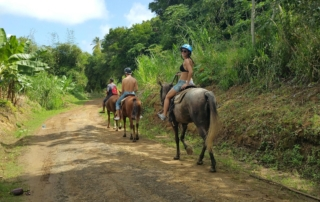 horse riding St. Lucia